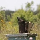 От утре до 30 май ще е изложението Пчеломания в Добрич