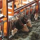 Гъбичките и техните отрови във фуражите