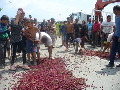 След розите, сега и производители на череши от Старозагорско засипаха асфалта с продукцията си, недоволни от ниските изкупни цени. СНИМКА: Ваньо Стоилов