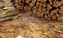 Полицаи задържаха три каруци с незаконна дървесина в Монтанско