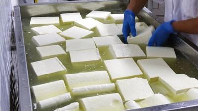 Над 200 мандри у нас правят сирене.