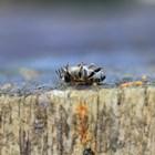 БАБХ започна проверки за състоянието на пчелите в цялата страна