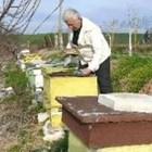 В критични моменти пчеларите трябва да подпомогнат активно пчелните семейства, като ги подхранят