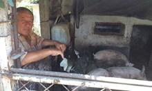 Потвърдена африканската чума в Пловдивско, в Белозем стягат тъжна лятна коледа