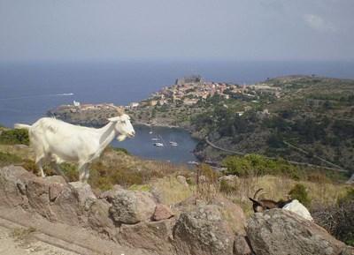 Остров Капрая е част от Тосканския архипелаг. СНИМКИ: Уикипедия