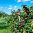 Една ябълка държидокторите настрана