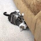 Ако котката ви остри ноктите си на дивана ви, сте си виновни сами Снимки: YouTube