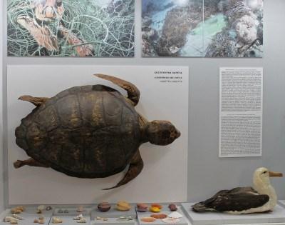 Новата експозиция в Природонаучния музей ще бъде постоянна.