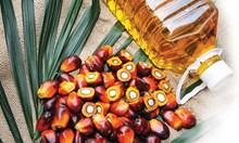 13 ползи от палмовото масло и 4 жестоки вреди