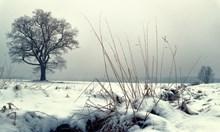 Утре ще се заоблачи, на места ще превалява сняг