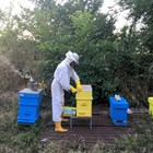 125 пчелари ще закупят оборудване с кредит по Националната програма по пчеларство