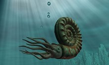 Видовете, които оцеляха стотици милиони години: Учените все още не могат да разгадаят тайната