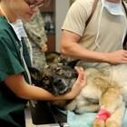 И кучетата, подобно на хората, страдат от катаракта на очите. Най-често се наблюдава при възрастни кучета. Но може да се получи и при травма на очите, захарен диабет или генетична предразположеност.