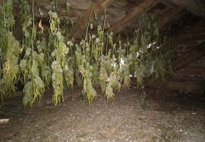 Откритите наркотични вещества Снимка: Архив