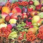 Сортове овошки, зреещи през септември