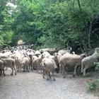 Какви са ставките по de minimis за животновъди