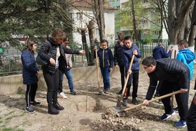 """Началото на инициативата под мотото """"Не бъди дърво, засади такова"""" бе поставено миналата седмица в 13 детски градини на територията на Русе, а днес още 48 дръвчета бяха засадени в дворовете на 9 училища. Снимки: Община Русе"""