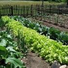 За зеленчуците почвата е много важна