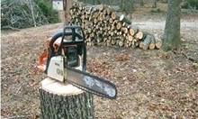 Уволниха ловен надзирател, хванат с крадени дърва в Благоевградско