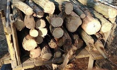 Проверяват за незаконна сеч в горите