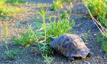 Германец на съд, отглеждал в селски двор защитени костенурки