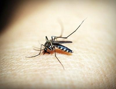 Предстои третиране срещу комари с наземна техника на територията на град Мартен СНИМКА: Pixabay
