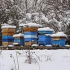 Едно семейство употребява 80 до 100 килограма мед на година и 25 до 30 килограма прашец или перга.