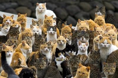 На японския остров Аошима броят на котките е шест пъти по-голям от този на хората.   СНИМКА: РОЙТЕРС