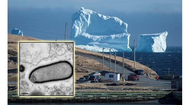 """Глобалното затопляне """"събужда"""" чума, едра шарка и антракс"""
