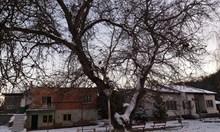 Кое е любимото българско дърво на годината