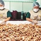 Расте световното търсене на биологичен джинджифил