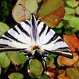 """""""Сърцето ми е тук"""": Пеперуда след дъжд в село Лозен"""