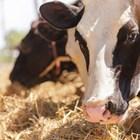 Кои животновъди какви ангажименти ще могат да поемат от 15 април