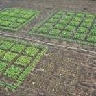 Нови открития за фотосинтезата могат да подобрят добивите