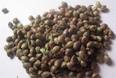 Медицински марихуана семена чай и конопля