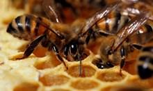 Ако работехме и ние като в пчелен кошер?