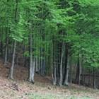 295 собственици на гори искат да ги продадат на горското