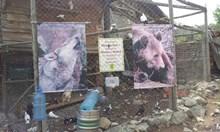 """Ангел Джамбазки: Шепа """"активисти"""" ни правят на маймуни"""