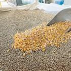 Много проблеми с качеството на зърното могат да бъдат избегнати, ако фуражът се съхранява в силози.