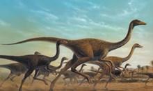 Замитат първия хадрозавър под килима - над 20 години го бъркат с морско влечуго