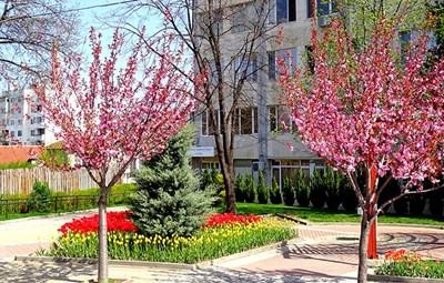 Община Костенец Снимка: Официален сайт на общината