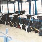 От 5 октомври фермерите доказват реализираното мляко и животни