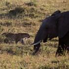 55 слона са умрели от глад през последните два месеца в Зимбабве