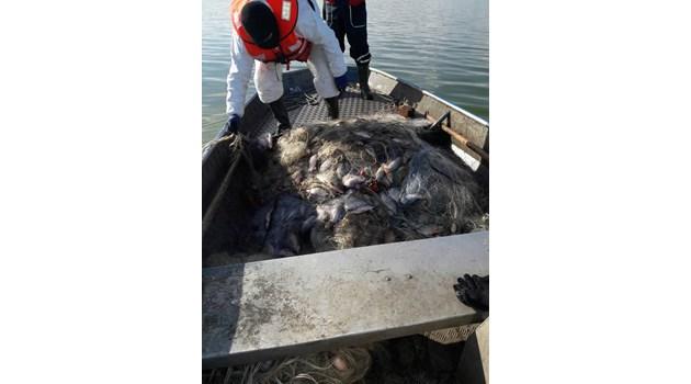 Полицията в Бургас задържа 300 кг. контрабандна риба и рибарски мрежи