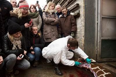 Служител на зоологическата градина в Копенхаген разфасова убития жираф Мариус пред деца. СНИМКА: РОЙТЕРС