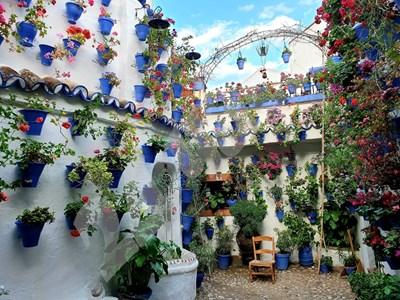 Тайните градини в стария град на Кордоба пленяват - това са малки дворчета, целите в цветя. СНИМКИ: ЛИЛЯНА КЛИСУРОВА СНИМКА: 24 часа