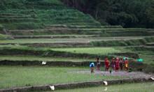 Национален ден на ориза в Непал