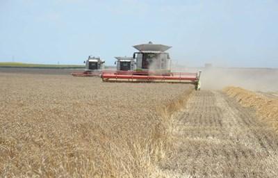 Жътвата на пшеницата в Добричка област