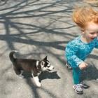 Научете децата и кучетата да играят заедно