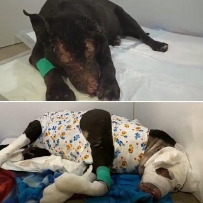 Кучето герой получи изгаряния, но оживя. СНИМКИ: ПЕТЕРБУРГ НЮЗ
